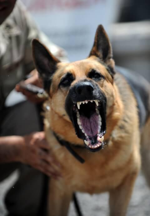 policedog_0__11