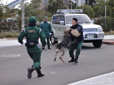 policedog_0__15
