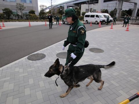 policedog_0__16