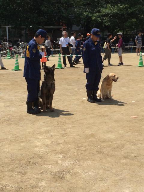 policedog_0__17