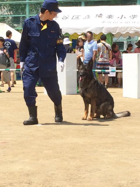 policedog_0__18