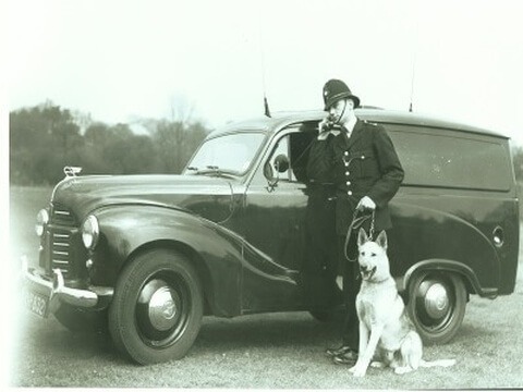 policedog_0__24