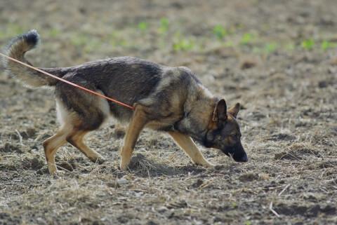policedog_0__7