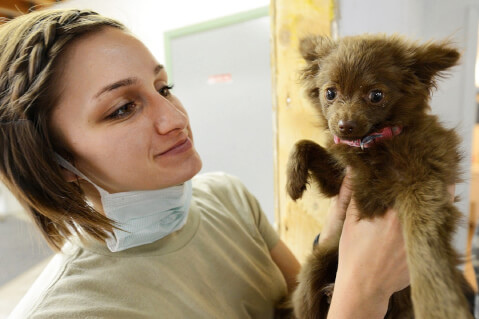 puppy_and_doctor