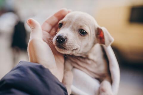 パピーミル 見分け方 犬 日本 悲惨 ペットショップ ブリーダー