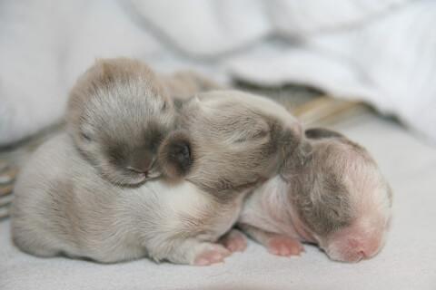 rabbit_babies_just_born