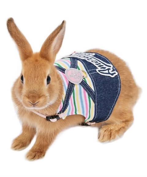 rabbit_clothes