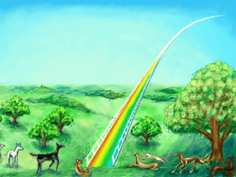 ペットの虹の橋