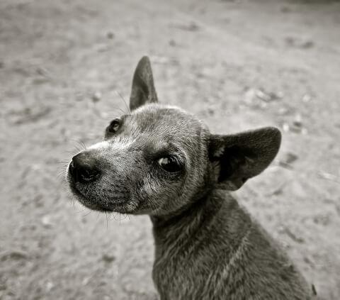 lookingbackdog