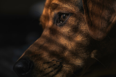 doginshadow