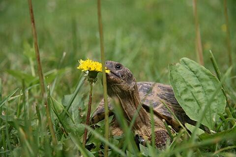 reptile-turtle