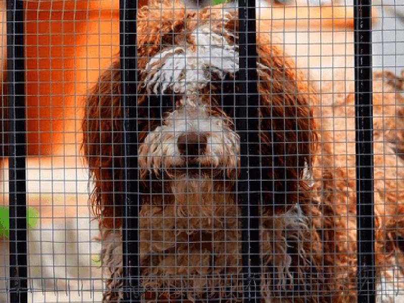 保護犬 と 殺処分 の問題 1頭でも不幸な犬を減らすために出来る