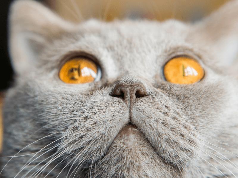 うさぎ 鼻水 透明