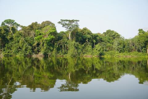 ボリビアの熱帯雨林