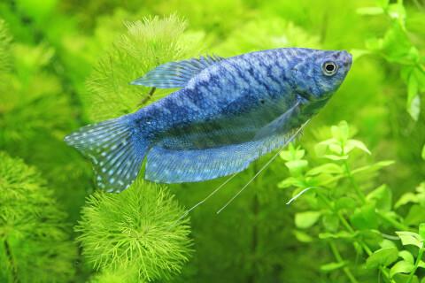 流木 熱帯魚