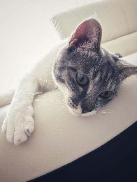 scratch_sofa