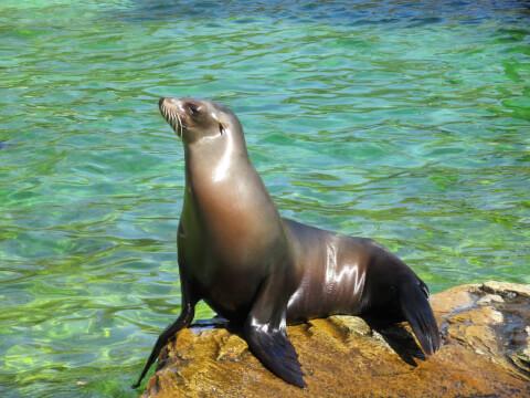アザラシ 種類 水族館 赤ちゃん かわいい アシカ