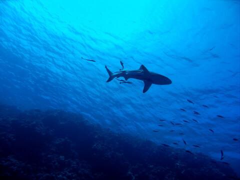 サメのシルエット
