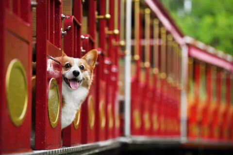 列車とコーギー