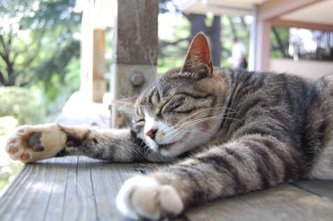 sleeping_striped_pattern_cat
