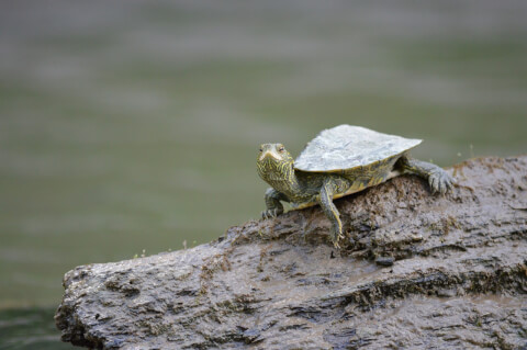 turtle_water