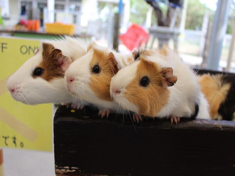 な つく 小動物 な つく 小動物: my blog