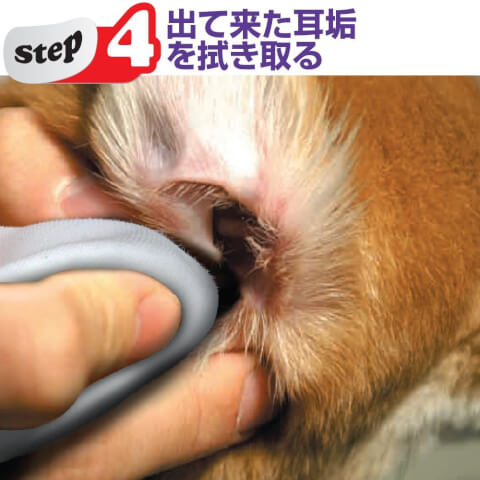 犬 耳掃除