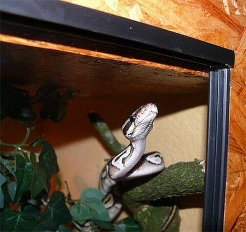 蛇 ケージ