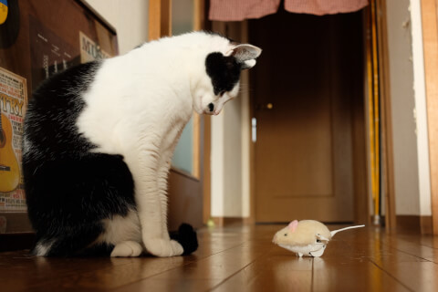 staring_at_mouse