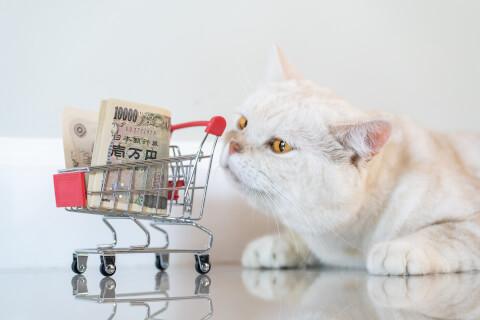 保護 猫 資金 検査 カフェ 引き取り 保護猫