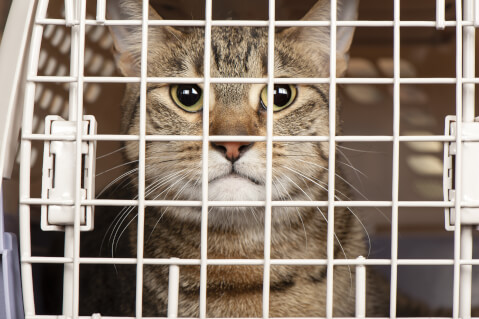 野良猫 保護 病院 方法 子猫 捕獲 ケージ