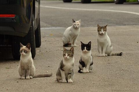 cats-street