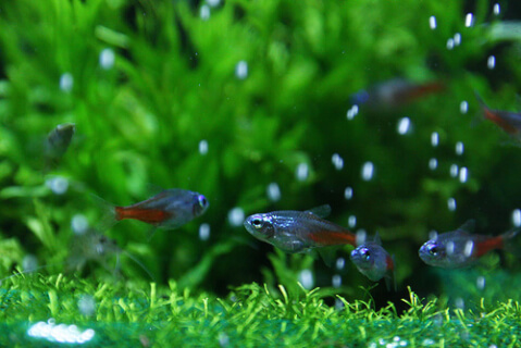 水温計 熱帯魚