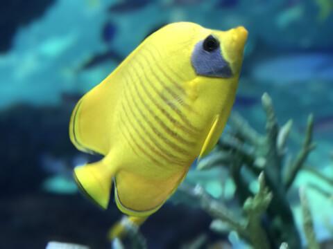 水温計 海水魚