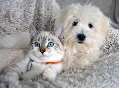 白い犬と灰色の猫