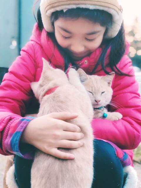 猫2匹と遊ぶ少女