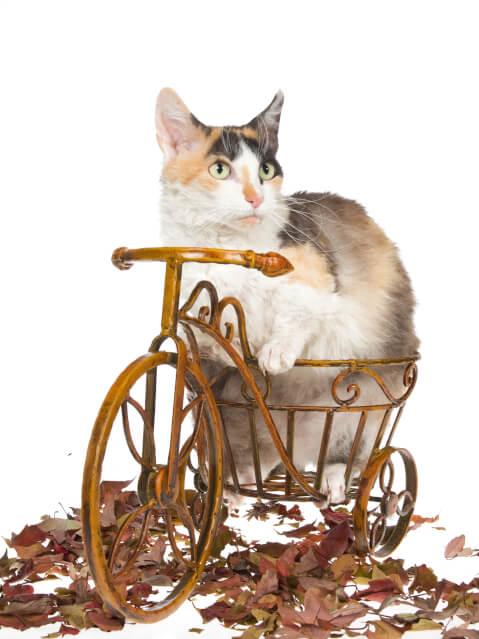 自転車のおもちゃに乗ったスクーカム