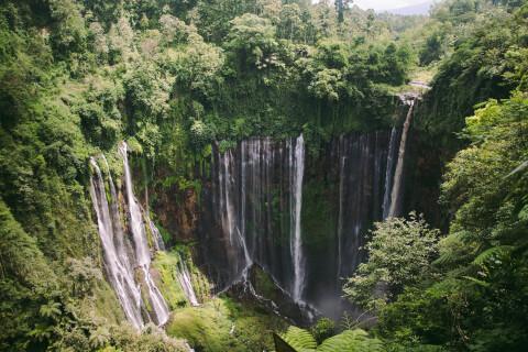 インドネシアの森林のイメージ