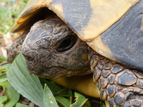 tortoise_eye