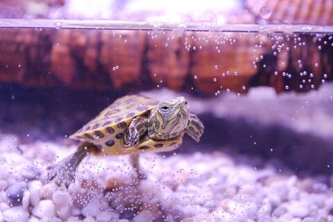 turtle_aquarium