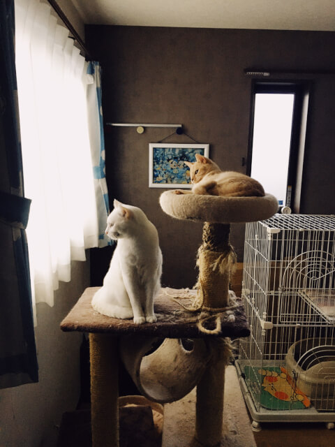 two_cats_on_tower