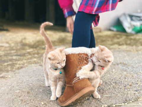 two_cats_play_boots
