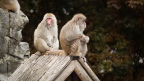 上野動物園 ゾウ 料金 予約 パンダ 赤ちゃん