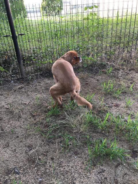 犬の排便姿勢
