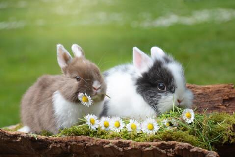 花をくわえる子ウサギ2匹