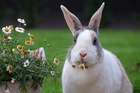 花を食べるうさぎ