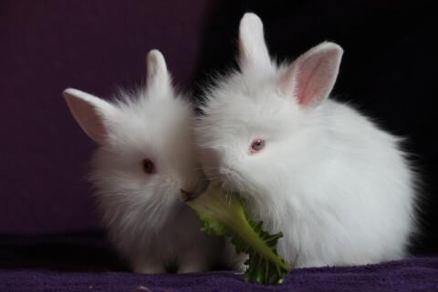 2匹の白い子うさぎ