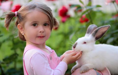 ウサギ_少女2