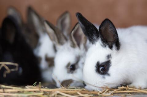 way_of_rabbit_food