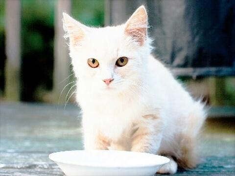 cat-milk
